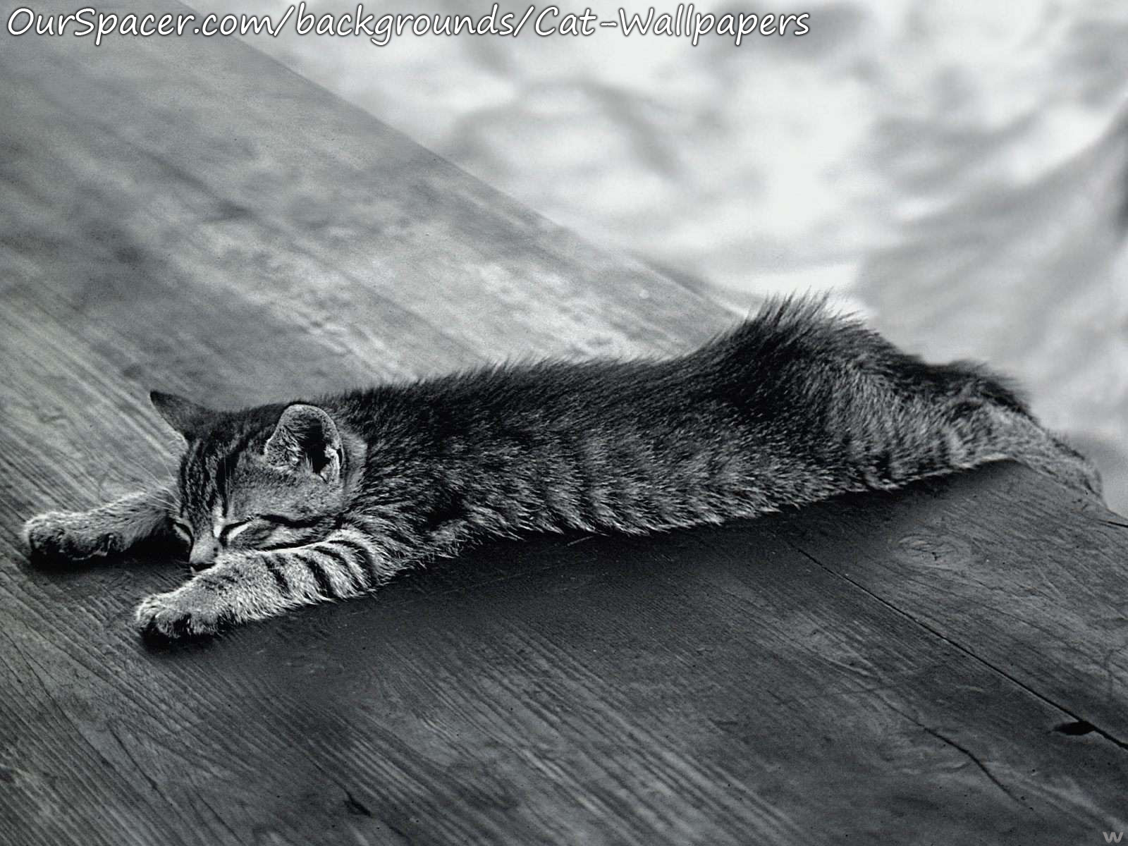 Black and white cat sprawled out on the deck wallpapers for myspace, twitter, and hi5 backgrounds