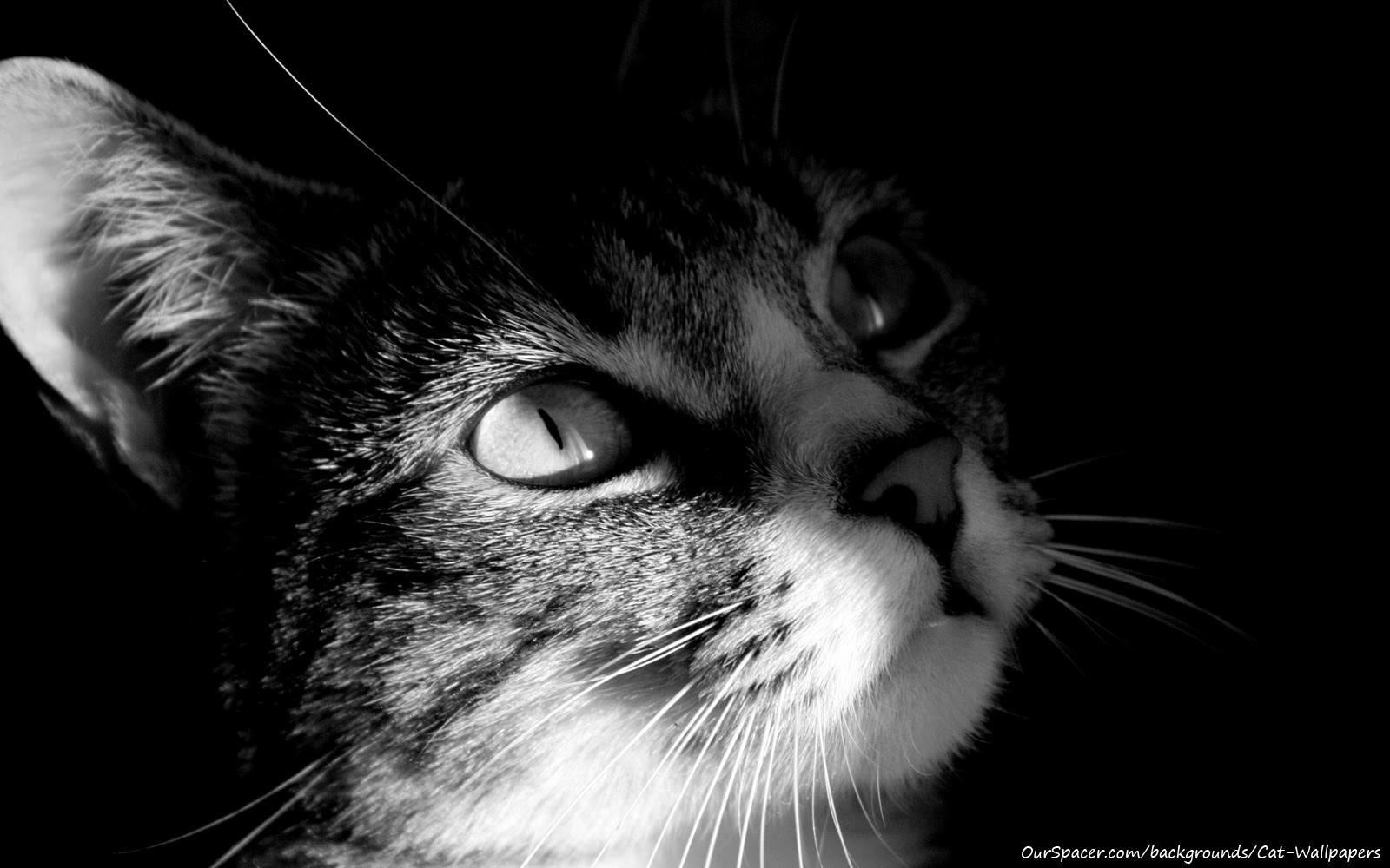 Cat looking forward to the future wallpapers for myspace, twitter, and hi5 backgrounds
