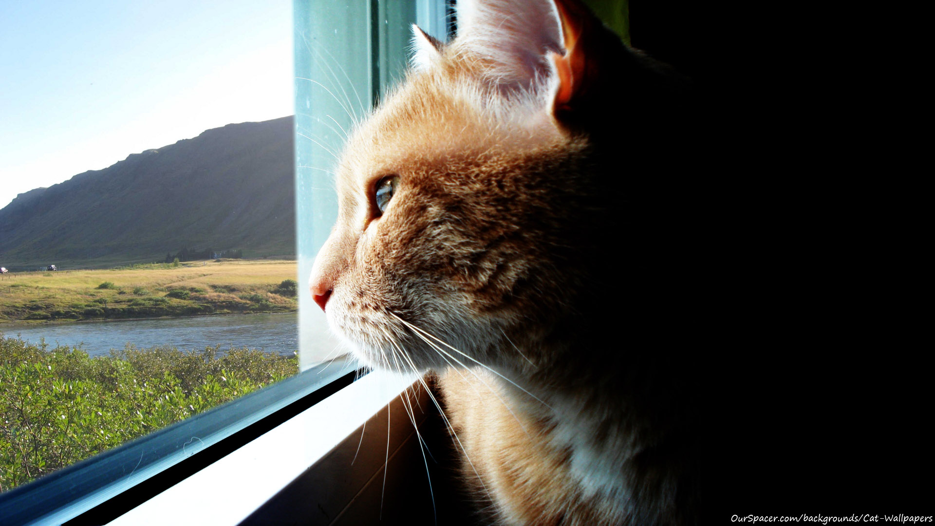 Cat looking out window scenic background wallpapers for myspace, twitter, and hi5 backgrounds