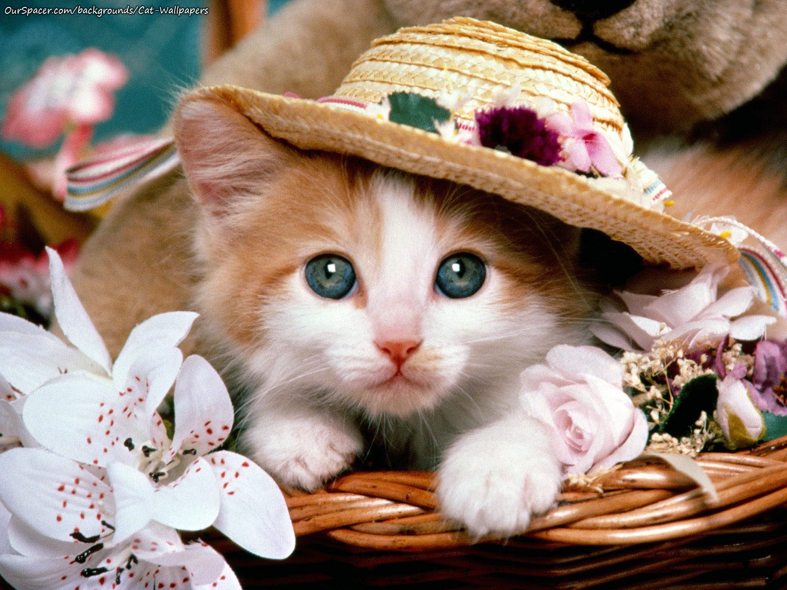 Cute kitten with a sun hat wallpapers for myspace, twitter, and hi5 backgrounds