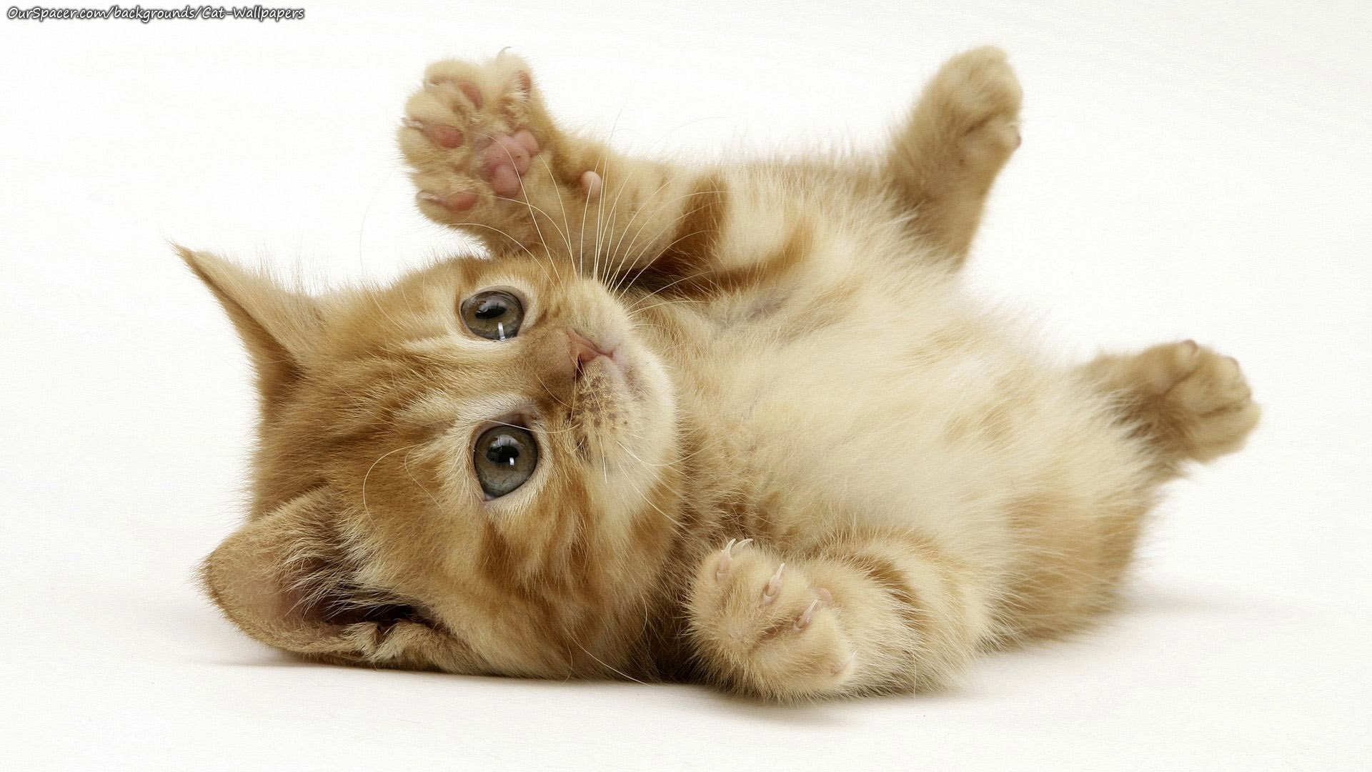 Cutie kitten looks like a little baby waiting to be carried wallpapers for myspace, twitter, and hi5 backgrounds