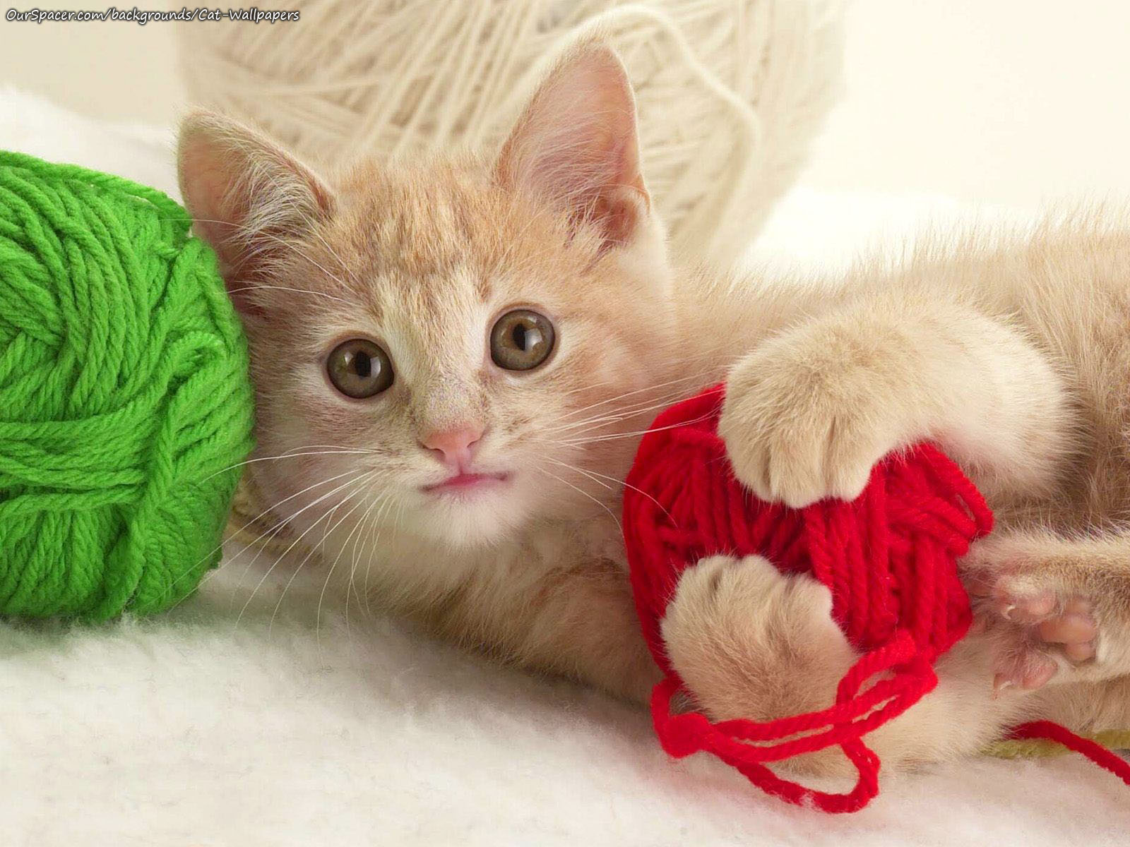 Kitten playing with yarn wallpapers for myspace, twitter, and hi5 backgrounds