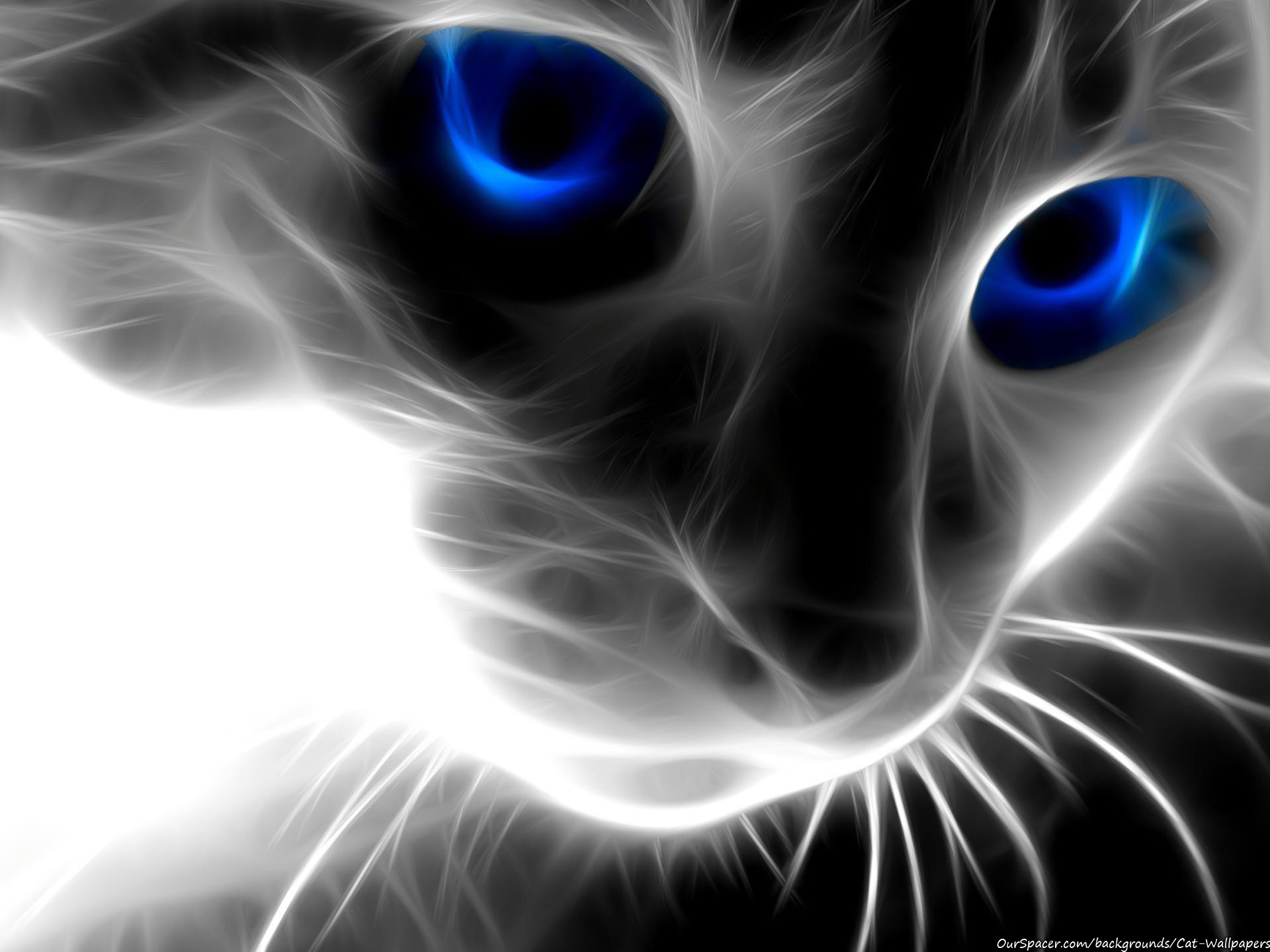 Transparent cat made of light with blue eyes wallpapers for myspace, twitter, and hi5 backgrounds