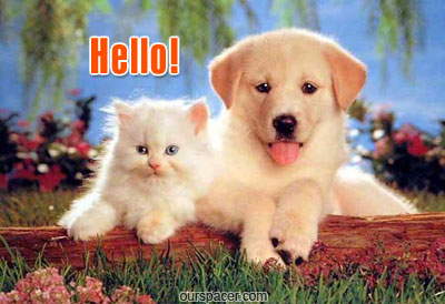 hello cat and dog myspace, friendster, facebook, and hi5 comment graphics