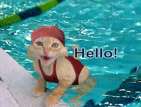 hello cat swimming myspace, friendster, facebook, and hi5 comment graphics