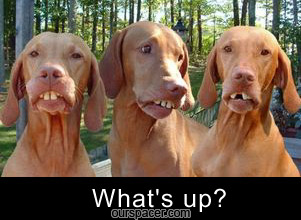what's up ugly dogs myspace, friendster, facebook, and hi5 comment graphics