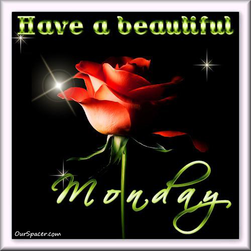 Pretty rose, have a beautiful Monday myspace, friendster, facebook, and hi5 comment graphics