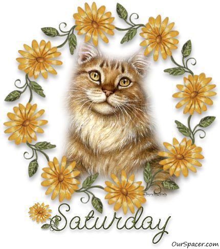 Cute old cat Saturday myspace, friendster, facebook, and hi5 comment graphics