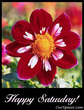 Happy Saturday red flower myspace, friendster, facebook, and hi5 comment graphics
