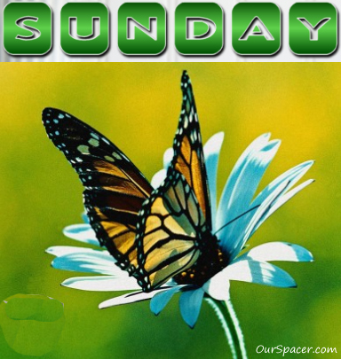 Butterfly Sunday graphics