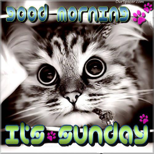 Good morning kittie, it's Sunday myspace, friendster, facebook, and hi5 comment graphics