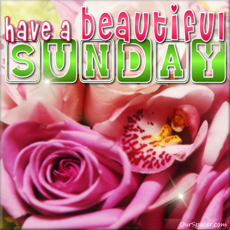 Have a beautiful Sunday pink roses myspace, friendster, facebook, and hi5 comment graphics