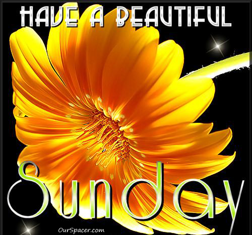 Have a beautiful Sunday sunflower myspace, friendster, facebook, and hi5 comment graphics